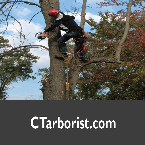CTarborist.com